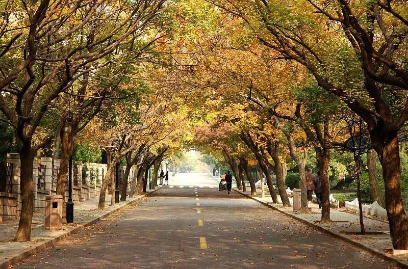 醉美青岛-日照·青岛·崂山·栈桥·八大关赏春·全程